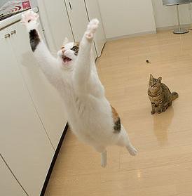airborne_cats.jpg