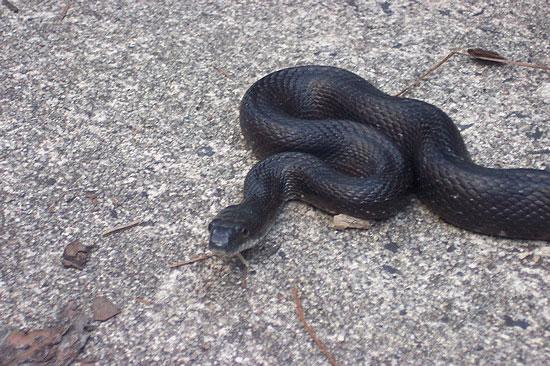 snake_slither.JPG